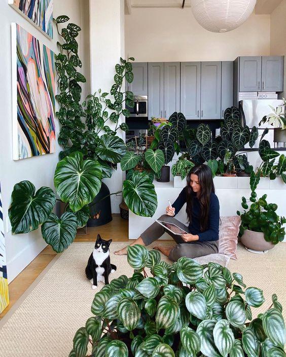اصول نگهداری گلهای آپارتمانی و گیاهان آپارتمانی