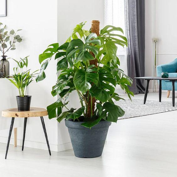 تقویت گلهای آپارتمانی