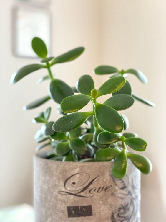 اصول نگهداری گلهای و گیاهان آپارتمانی