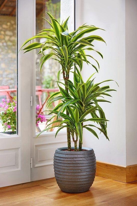 نگهداری گیاهان آپارتمانی در مسافرت