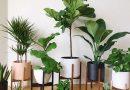 نگهداری گیاهان آپارتمانی