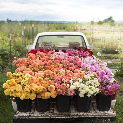 انواع گل ها و نگهداری آن ها