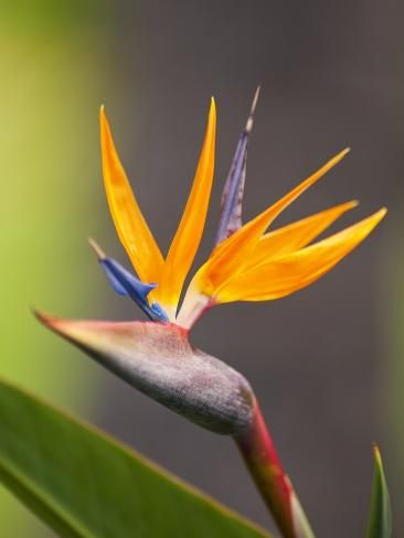 نحوه نگهداری گل پرنده بهشتی